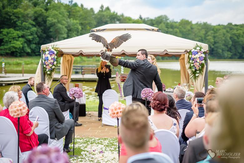 Adlerflug bei einer Hochzeit