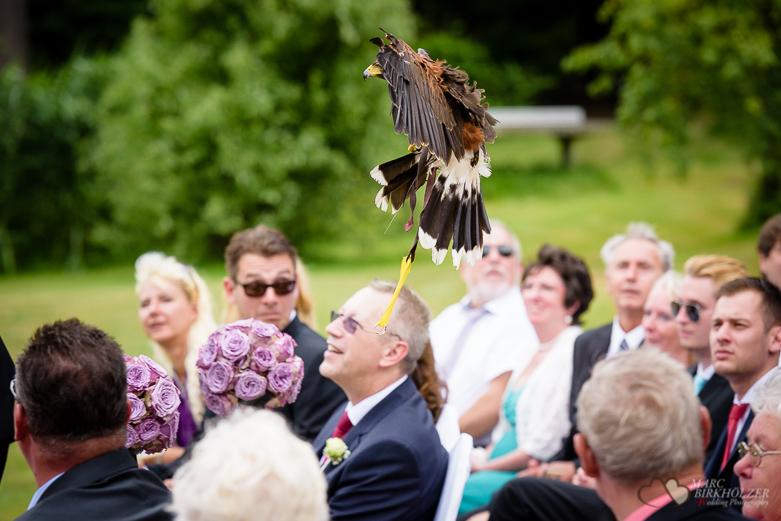 Der Adler bring die Ringe