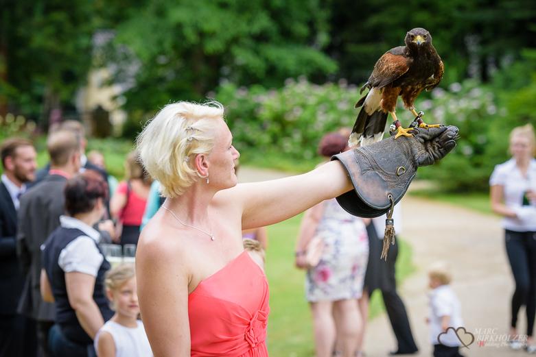 Adler auf dem Arm eines Hochzeitsgast